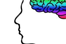 cerebro_1